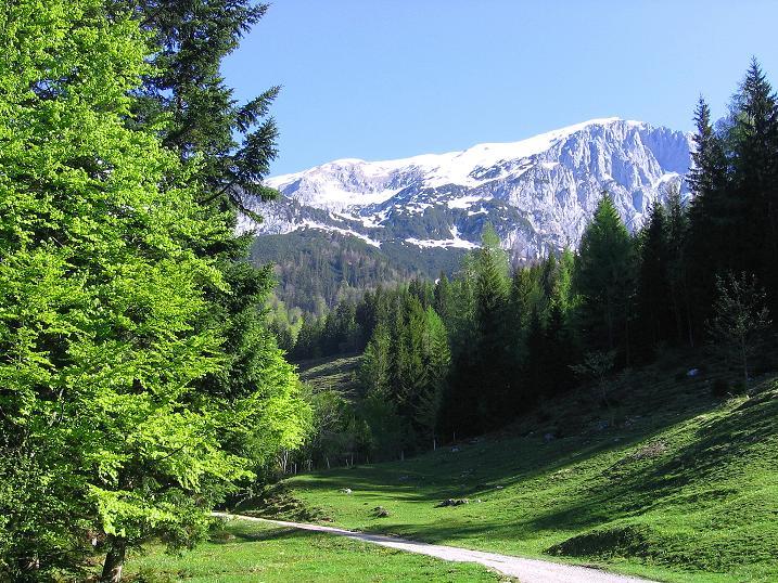 Foto: Andreas Koller / Wander Tour / Von Scheffau in das Schneekar (2121m) / Anstieg ins Schneekar mit Blick auf die Kopfkraxen (2178 m) / 16.05.2008 02:27:01