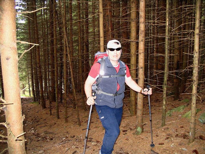 Foto: Andreas Koller / Wander Tour / Durch den Brandstätter Graben auf den Maierangerkogel (2356m) / Im dichten Wald / 20.05.2008 00:44:48