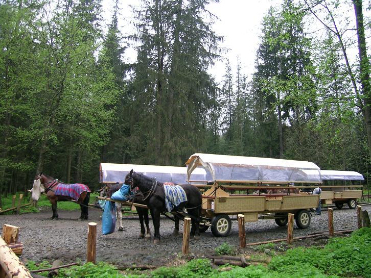 Foto: Andreas Koller / Wander Tour / Über den Morskie Oko zum Fuß des Rysy (1583 m) / Die Wanderung beginnt mit einer Kutschenabfahrt / 26.05.2008 17:54:11