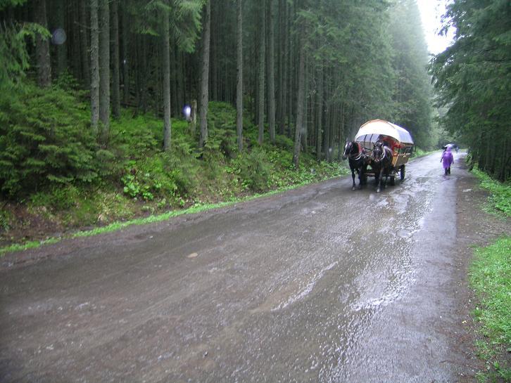Foto: Andreas Koller / Wander Tour / Über den Morskie Oko zum Fuß des Rysy (1583 m) / Abstieg auf der Asphaltstraße, wo die Pferdekutschen verkehren. / 26.05.2008 17:49:06