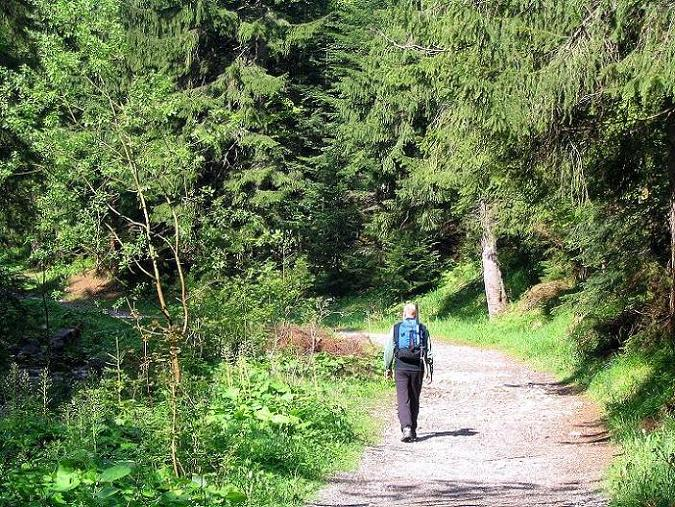 Foto: Andreas Koller / Wander Tour / Dolina Matej Laki und Malolaczniak (2096 m) / Schöner Waldweg ins Dolina Matej Laki / 29.05.2008 01:44:36