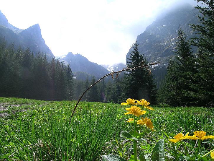 Foto: Andreas Koller / Wander Tour / Dolina Matej Laki und Malolaczniak (2096 m) / Auf der romantischen Mata Polanka / 29.05.2008 01:42:13