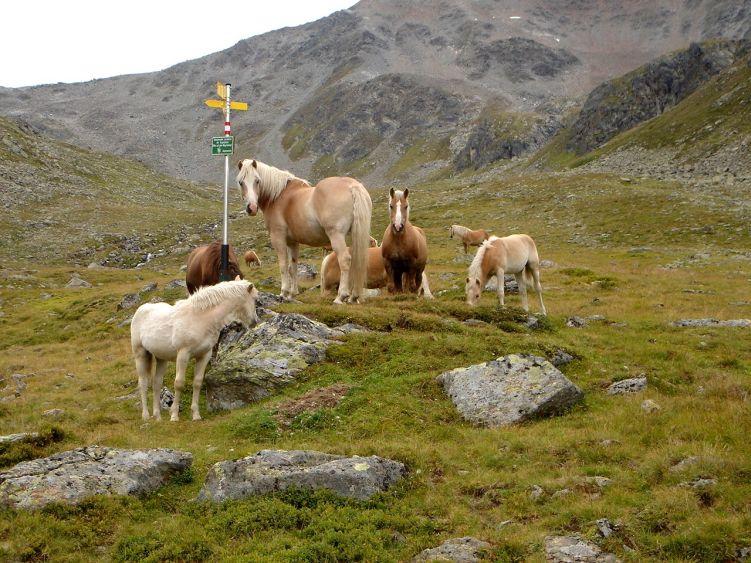 Foto: Manfred Karl / Wander Tour / Durch das Istalanztal auf den Hexenkopf / Auch die Pferde schätzen die saftigen Weiden der Berglialpe. / 29.05.2008 20:46:34