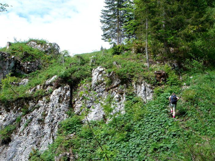 Foto: Manfred Karl / Wander Tour / Vom Soderbauer auf das Schwarzeck / Nach der Querung des Grabens / 03.06.2008 08:42:29