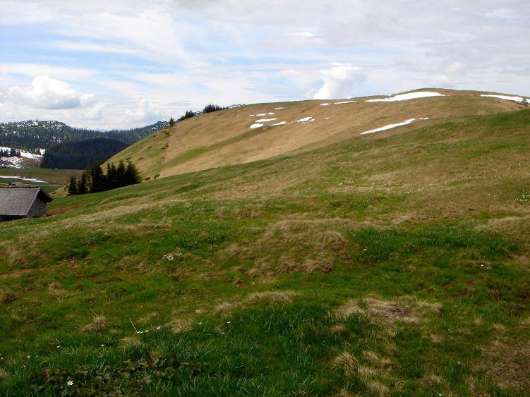 Foto: Manfred Karl / Wander Tour / Vom Soderbauer auf das Schwarzeck / Die weite Gipfelfläche / 03.06.2008 08:37:11