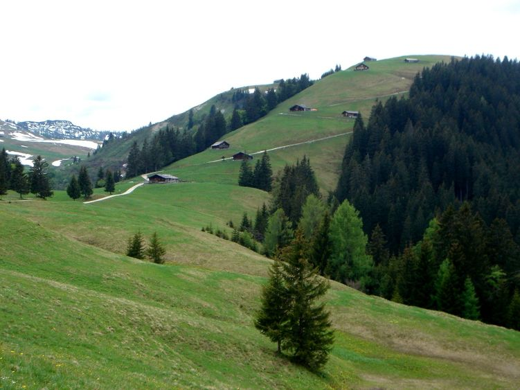 Foto: Manfred Karl / Wander Tour / Vom Soderbauer auf das Schwarzeck / Rückblick Schwarzeck Almen / 03.06.2008 08:28:44