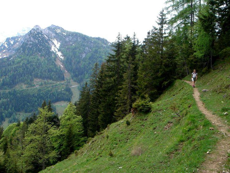 Foto: Manfred Karl / Wander Tour / Vom Soderbauer auf das Schwarzeck / Am Weg zur Thällern Alm / 03.06.2008 08:28:20