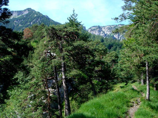 Foto: Manfred Karl / Wander Tour / Alpgartental Umrahmung / Noch ist es ein gemütliches Dahinwandern. / 05.06.2008 17:32:56