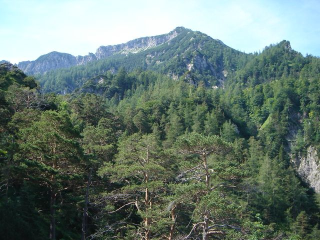 Foto: Manfred Karl / Wander Tour / Alpgartental Umrahmung / Dreisesselberg vom unteren Teil des Aufstieges aus gesehen. / 05.06.2008 17:32:04