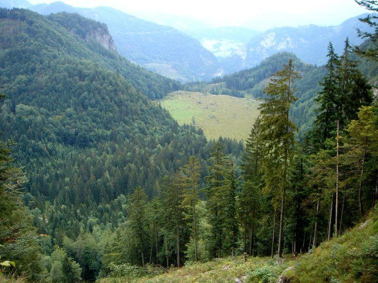 Foto: Manfred Karl / Wander Tour / Knallstein über die Stefan Schatzl Hütte / Noch ist es ein Stück hinunter zur Schönalm / 08.06.2008 19:45:27