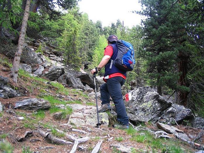 Foto: Andreas Koller / Wander Tour / Über die Pilsbergalm auf den Soyspitz (3030 m) / Schöner Steig im Wald zur Pilsbergalm / 17.06.2008 17:29:22