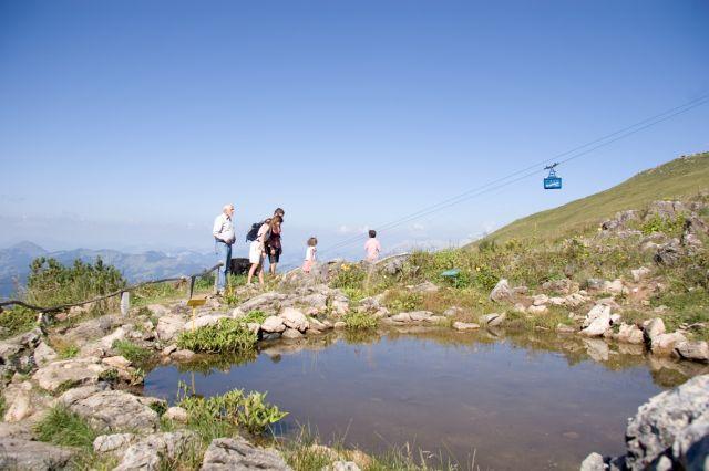 Foto: Kitzbühel Tourismus / Wander Tour / Alpenblumenweg / 17.10.2008 15:34:06