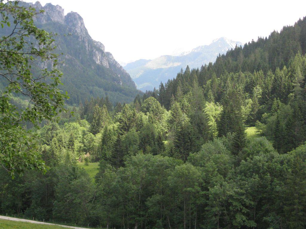 Foto: Jürgen Lindlbauer / Mountainbike Tour / Von Windischgarsten über Spital a. Pyhrn auf den Hengstpaß / Blick Richtung Haller Mauer zwischen Egglalm und Hengstpaß / 22.06.2008 20:26:10