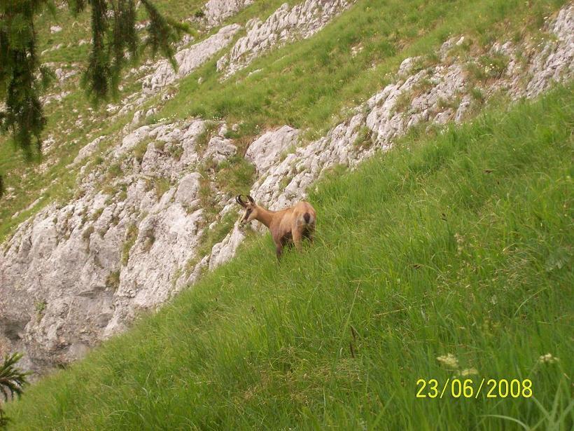 Foto: Wolfgang Dutzler / Wander Tour / Von der Offenseestraße auf den Eibenberg / Gams / 25.06.2008 18:27:55