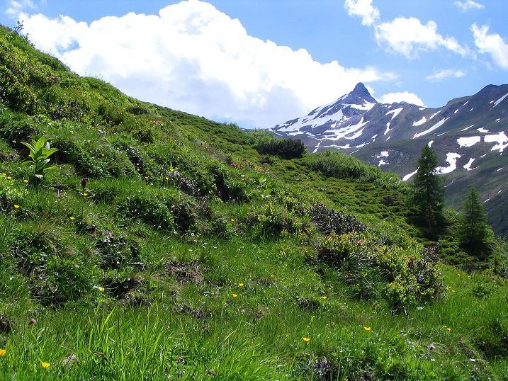Foto: Andreas Koller / Wander Tour / Tappenkarseehütte - Weißgrubenkopf - Franz Fischerhütte (2369m) / Ständiger Begleiter beim Aufstieg ist die Glingspitze (2433 m) / 24.06.2008 16:29:12