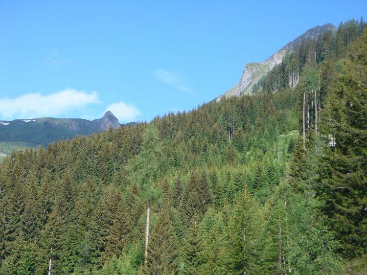 Foto: Manfred Karl / Mountainbike Tour / Aus dem Großarltal auf die Viehhausalm / Trotz des Waldes hat man immer wieder schöne Ausblicke / 26.06.2008 18:11:49