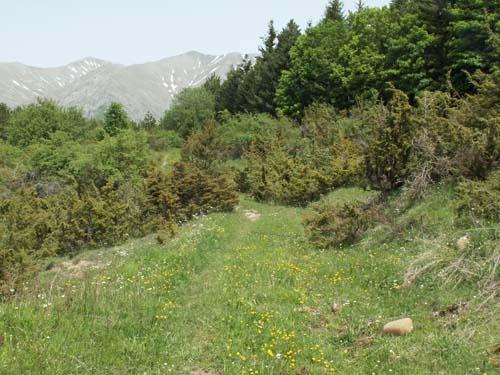 Foto: lobivia / Wander Tour / Wandertage Abruzzen: Etappe 1  Amatrice - Campotosto / 11.07.2008 08:55:04