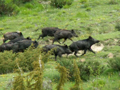 Foto: lobivia / Wander Tour / Wandertage Abruzzen: Etappe 2 Campotosto - Paladini / Wildlife / 11.07.2008 09:19:33