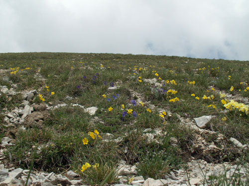 Foto: lobivia / Wander Tour / Wandertage Abruzzen: Etappe 5 Campo Imperatore - Castel del Monte / 21.07.2008 18:50:21