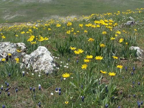 Foto: lobivia / Wander Tour / Wandertage Abruzzen: Etappe 5 Campo Imperatore - Castel del Monte / 21.07.2008 18:48:19