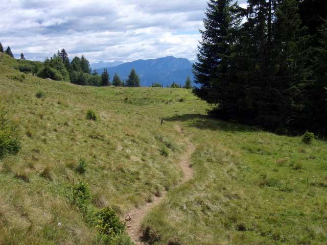 Foto: Grasberger Gerhard / Mountainbike Tour / Von Dellach in die Nockberge / Abfahrtsgelände (leichterer Teil) / 31.07.2008 16:53:39
