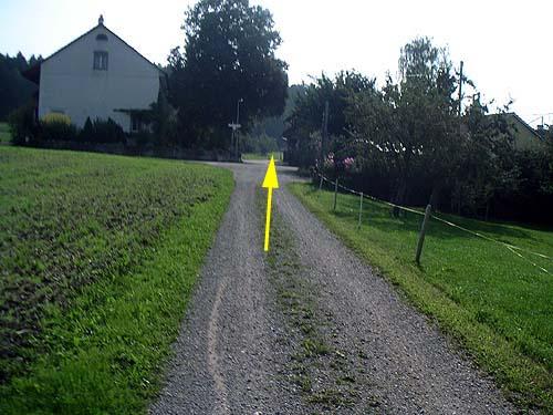 Foto: lobivia / Mountainbike Tour / Wiesendangen-Buch-Schneitberg-Elgg-Risiloch-Schottikon-Schnasberg-Wiesendangen / 23.06.2009 16:09:18