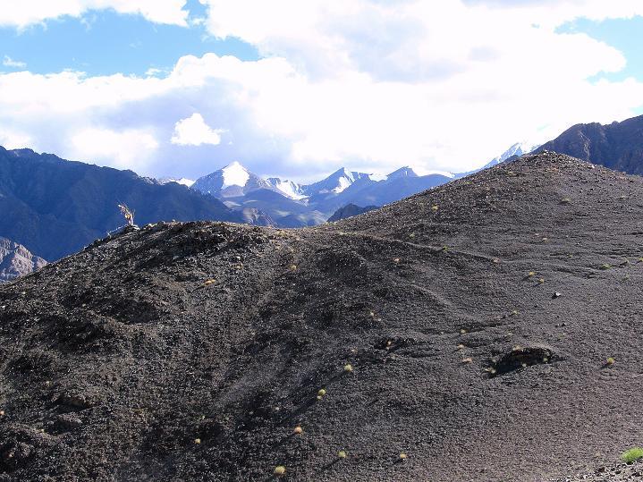 Foto: Andreas Koller / Wander Tour / Choklamsar Ri (4000m) - Akklimatisationstour über Leh / Blick über den Vorgipfel in die Stok Kangri Berge / 08.09.2008 23:48:39