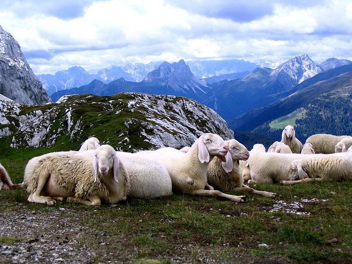Foto: Andreas Koller / Klettersteig Tour / Via Sartor auf den Hochweißstein / Monte Peralba (2694m) / Gesellschaft am Hochalpjoch / 10.09.2008 00:09:28