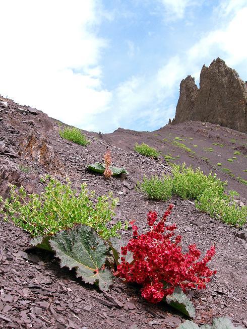 Foto: Andreas Koller / Wander Tour / Vom Stok Gompa auf den Stok Ri (5002m) / Vegetation kurz vor der Passhöhe / 10.09.2008 00:58:41