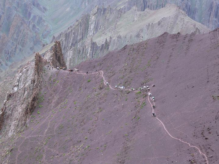 Foto: Andreas Koller / Wander Tour / Vom Stok Gompa auf den Stok Ri (5002m) / Blick vom Stok La auf den Vorpass, den gerade Tragtiere passieren / 10.09.2008 00:57:05