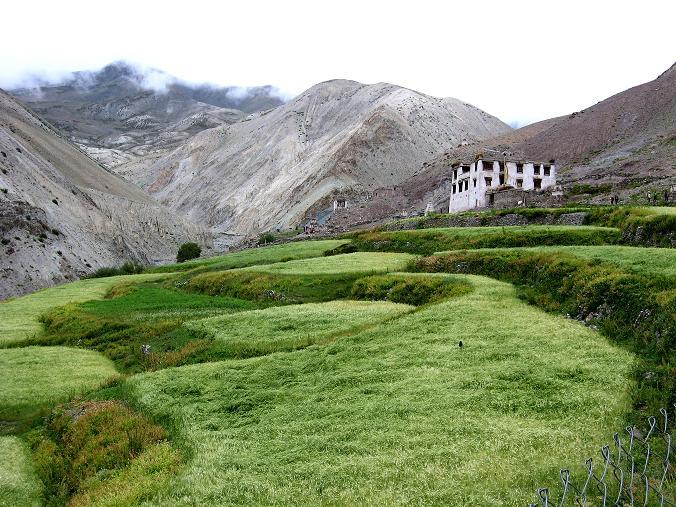 Foto: Andreas Koller / Wander Tour / Über den Ganda Ri (5113m) ins Markha Valley / Ein ladakhischer Bauernhof / 12.09.2008 00:20:50