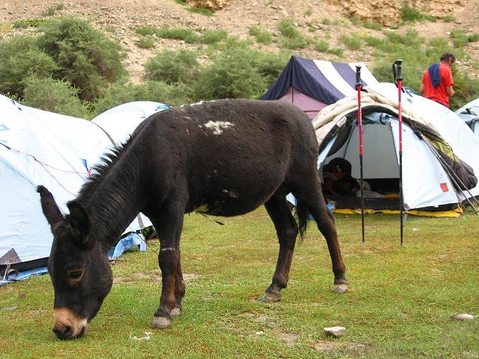 Foto: Andreas Koller / Wander Tour / Durch das Markha Valley nach Tachuntse (4406m) / Besuch im Lager / 12.09.2008 01:29:57