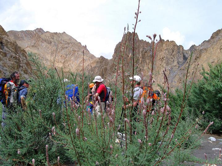 Foto: Andreas Koller / Wander Tour / Durch das Markha Valley nach Tachuntse (4406m) / Romantisches Markha Valley / 12.09.2008 01:22:57