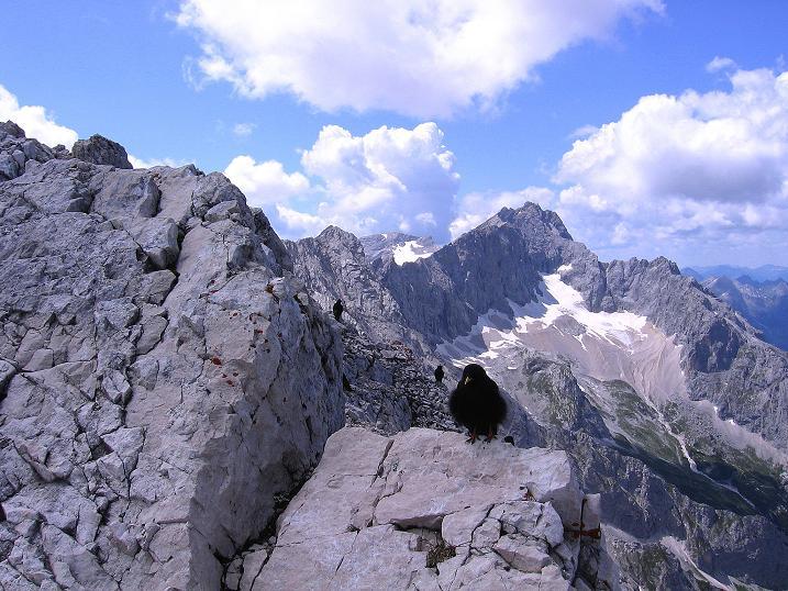 Foto: Andreas Koller / Klettersteig Tour / Alpspitze Ferrata und Überschreitung (2628m) / Die Zugspitze zeigt sich im W (2963 m) / 12.09.2008 15:42:59