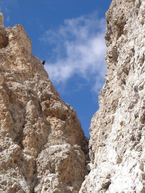 Foto: Manfred Karl / Klettersteig Tour / Laurenzisteig auf den Mittleren Molignon / Steiles D-Stück, der Fels ist hier fest und griffig / 14.09.2008 11:28:12