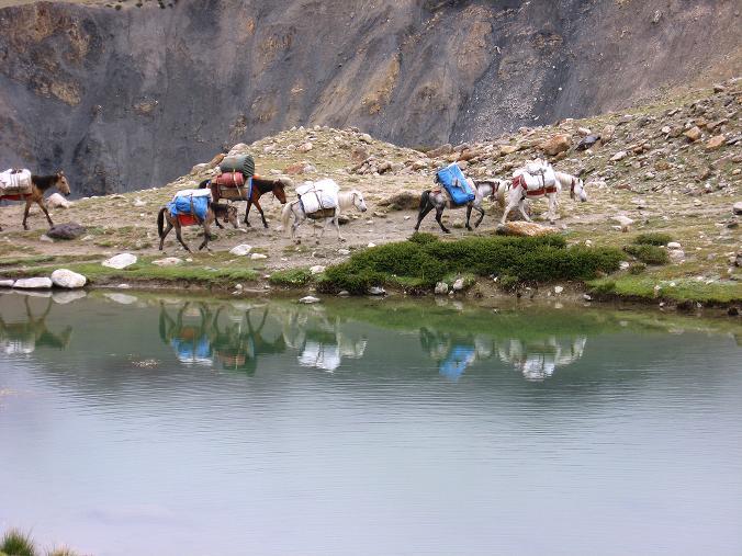 Foto: Andreas Koller / Wander Tour / Von Tachuntse auf den Nimaling Ri (5648m) / Tragtiere vor einem Bergsee in Nimaling / 14.09.2008 00:27:59