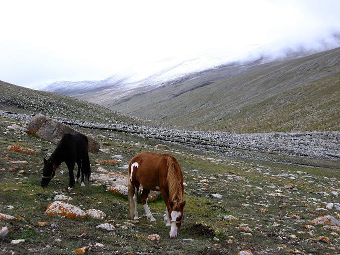 Foto: Andreas Koller / Wander Tour / Von Tachuntse auf den Nimaling Ri (5648m) / Neuschnee im Hochtal von Nimaling / 14.09.2008 00:21:54