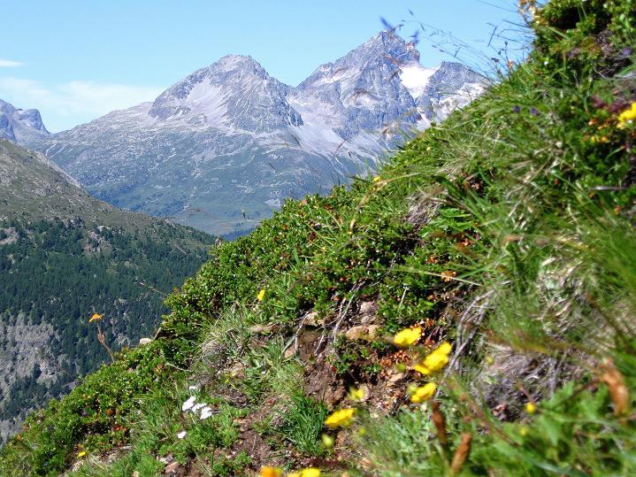 Foto: Andreas Koller / Wander Tour / Piz Languard (3262m) - Bernina-Aussichtsloge  / Piz Julier (3388 m) / 14.09.2008 17:13:28