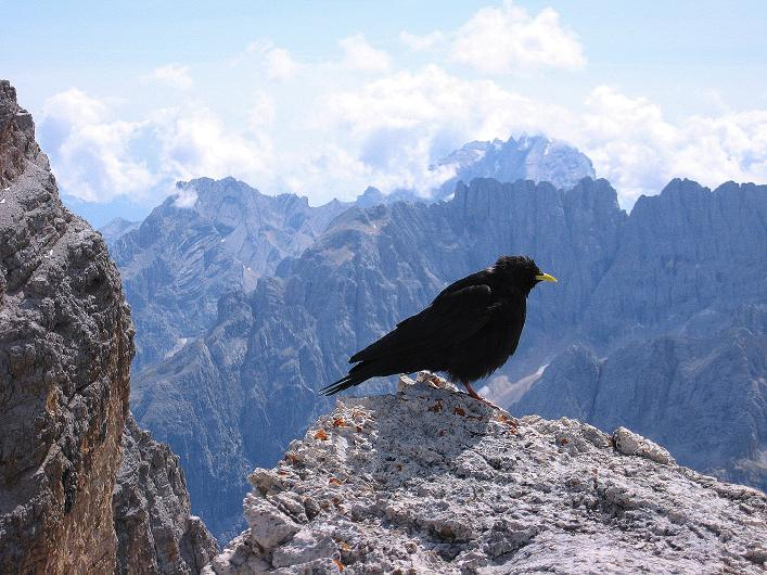 Foto: Andreas Koller / Klettersteig Tour / Ferrata Marino Bianchi - Cristallo di Mezzo (3167 m) / Besuch am Gipfel gegen Sorapis (3205 m) / 23.09.2008 01:28:43