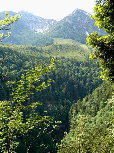 Foto: Manfred Karl / Klettersteig Tour / Klettersteig durch die Postalmklamm / Ausblick zum Scharfen und Braunedelkogel vom Weg durch den Schnitzhofwald / 23.09.2008 17:23:02
