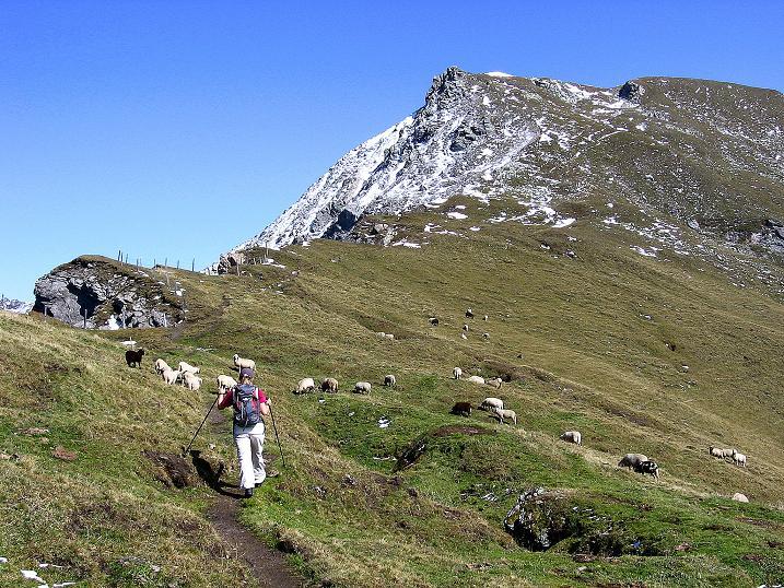 Foto: Andreas Koller / Wander Tour / Vom Glocknerblick auf den Mohar (2604m) / Der letzte steile Aufschwung zum Mohar / 30.09.2008 22:42:56