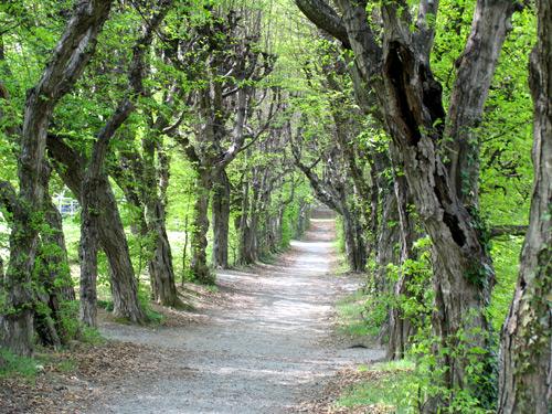 Foto: NaturparkPöllauerTal / Wander Tour / Naturpark Erlebnis-Rundweg / Allee im Schlosspark Pöllau, (c) TV Naturpark Pöllauer Tal / 02.10.2008 08:27:23