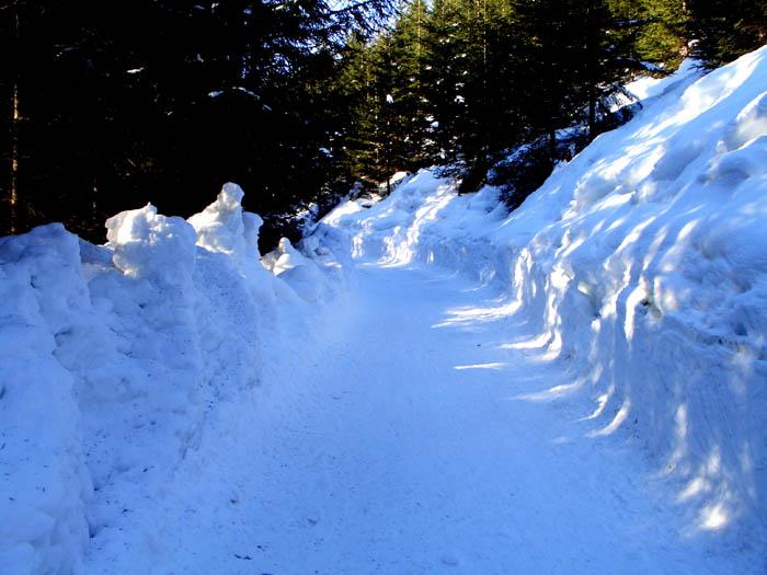 Foto: vince 51 / Schneeschuh Tour / Von Elbigenalp auf die Mutte (2187m) / zwischen Gibler-Alm und Wildfütterung / 10.11.2008 22:28:48