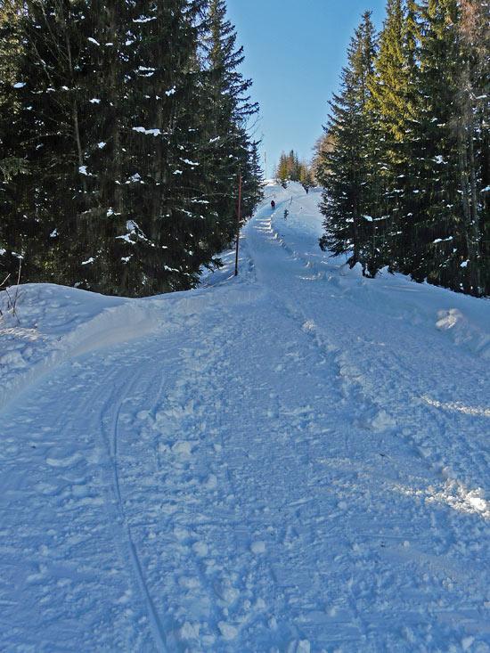 Foto: vince 51 / Schneeschuh Tour / Von Elbigenalp auf die Mutte (2187m) / 29.12.2008 22:09:28