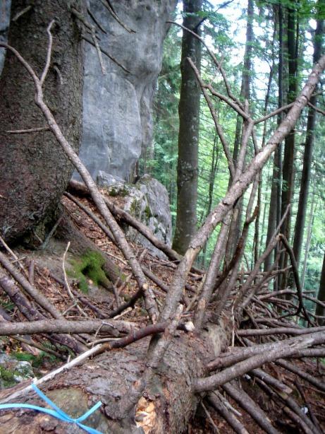 Foto: Manfred Karl / Klettersteig Tour / Mein Land – Dein Land Klettersteig / Der umgestürzte Baum mit dem blauen Markierungsband: Abzweigung zum Klettersteig Mein Land - Dein Land / 13.11.2008 21:41:46