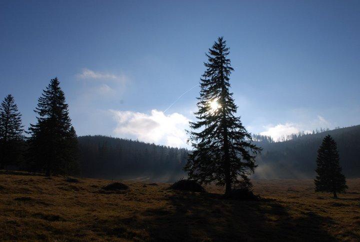 Foto: scouty_caro / Wander Tour / Payerbach - Eng - Lackabodengraben - Bodenwiese - Payerbach / Bodenwiese / 18.11.2008 12:01:43