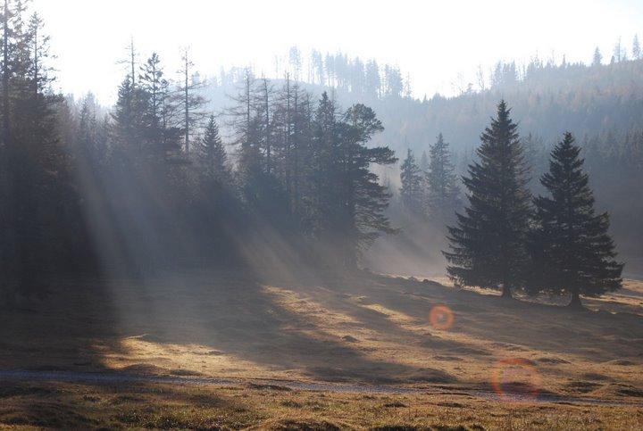 Foto: scouty_caro / Wander Tour / Payerbach - Eng - Lackabodengraben - Bodenwiese - Payerbach / Bodenwiese / 18.11.2008 12:01:49