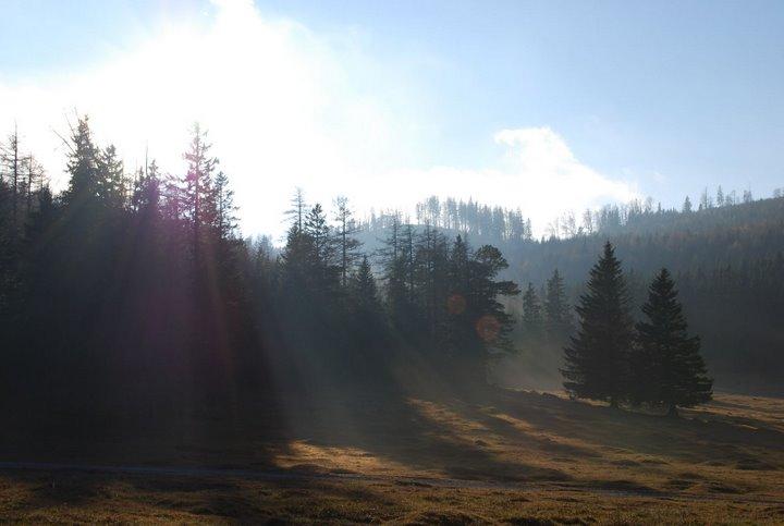 Foto: scouty_caro / Wander Tour / Payerbach - Eng - Lackabodengraben - Bodenwiese - Payerbach / Bodenwiese / 18.11.2008 12:01:53