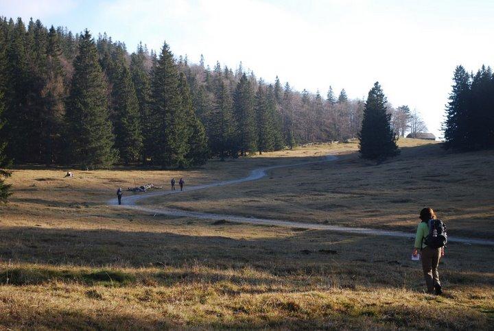 Foto: scouty_caro / Wander Tour / Payerbach - Eng - Lackabodengraben - Bodenwiese - Payerbach / Bodenwiese Blickrichtung Waldburgangerhütte / 18.11.2008 12:01:59
