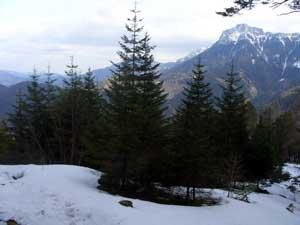 Foto: Datzi / Schneeschuh Tour / Rundtour Göller (Biwak) - Gippel - Schwarzauer Gippel / Der Blick zum Gippel ( Noch ein weiter Weg ) / 07.12.2008 09:06:00